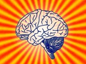 cerveau en forme
