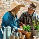 jardinage personne âgée facile